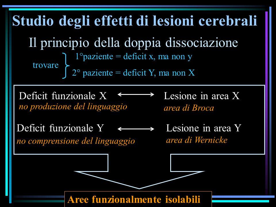 Studio degli effetti di lesioni cerebrali Il principio della doppia dissociazione 1°paziente = deficit x, ma non y 2° paziente = deficit Y, ma non X L