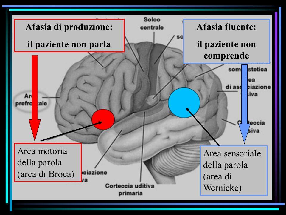 Studio degli effetti di lesioni cerebrali Il principio della doppia dissociazione Lesione in area X area di Broca Deficit funzionale X produzione del