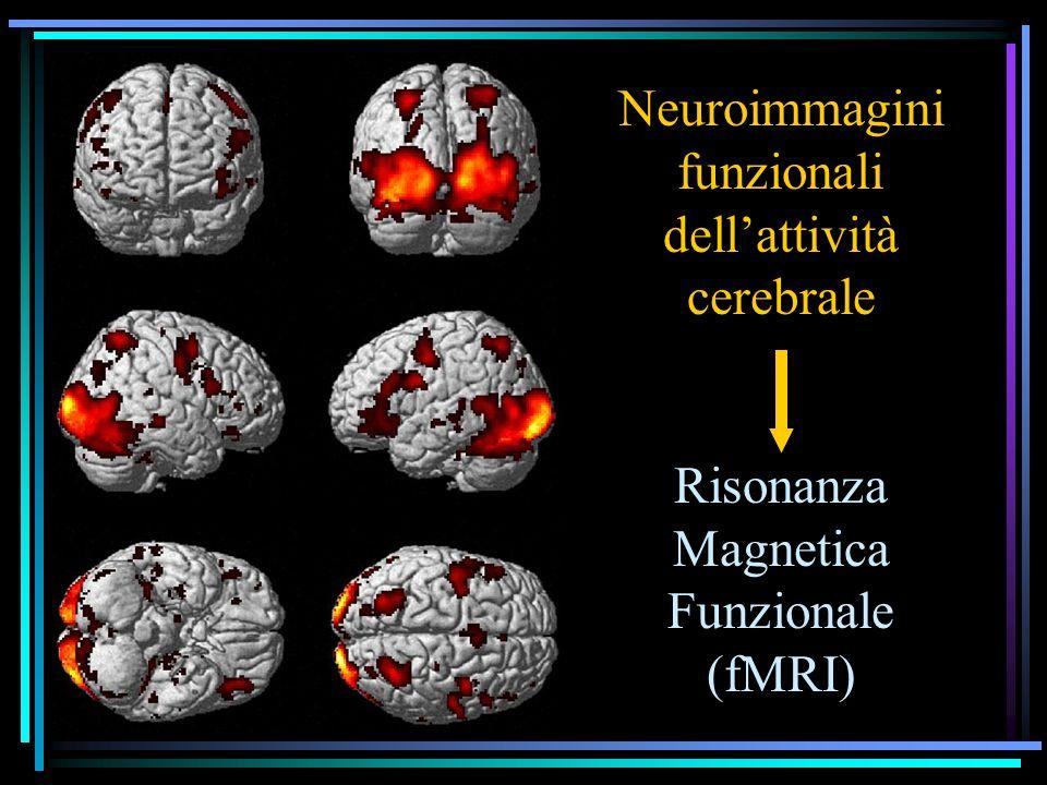 Neuroimmagini funzionali dellattività cerebrale Risonanza Magnetica Funzionale (fMRI)