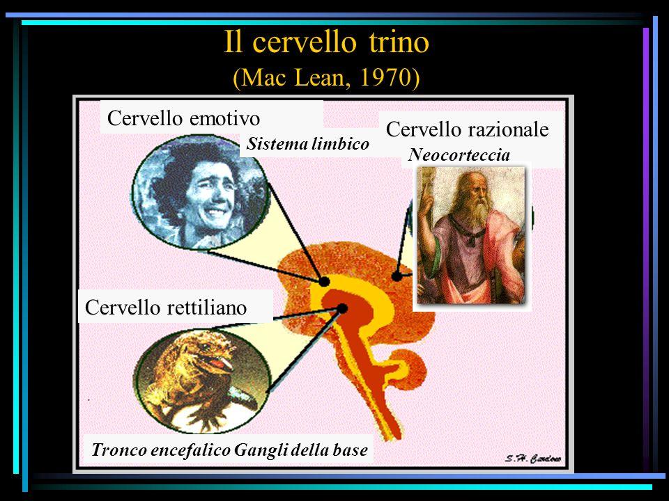 Il cervello trino (Mac Lean, 1970) Sistema limbico Cervello razionale Neocorteccia Cervello emotivo Cervello rettiliano Tronco encefalico Gangli della