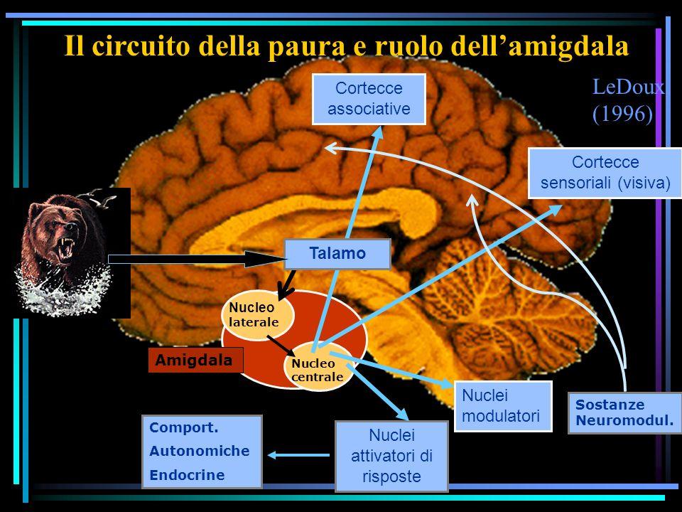 Il circuito della paura e ruolo dellamigdala Nucleo laterale Nucleo centrale Cortecce sensoriali (visiva) Cortecce associative Nuclei attivatori di risposte Sostanze Neuromodul.