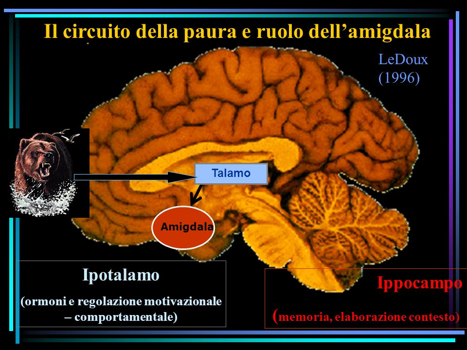 LeDoux (1996) Il circuito della paura e ruolo dellamigdala Amigdala Talamo Ippocampo ( memoria, elaborazione contesto) Ipotalamo (ormoni e regolazione