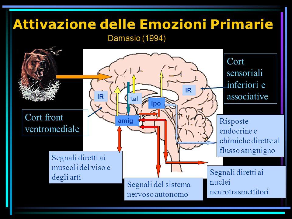 Attivazione delle Emozioni Primarie Segnali diretti ai nuclei neurotrasmettitori Segnali diretti ai muscoli del viso e degli arti Segnali del sistema nervoso autonomo IR ipo amig Risposte endocrine e chimiche dirette al flusso sanguigno Damasio (1994) tal Cort front ventromediale Cort sensoriali inferiori e associative