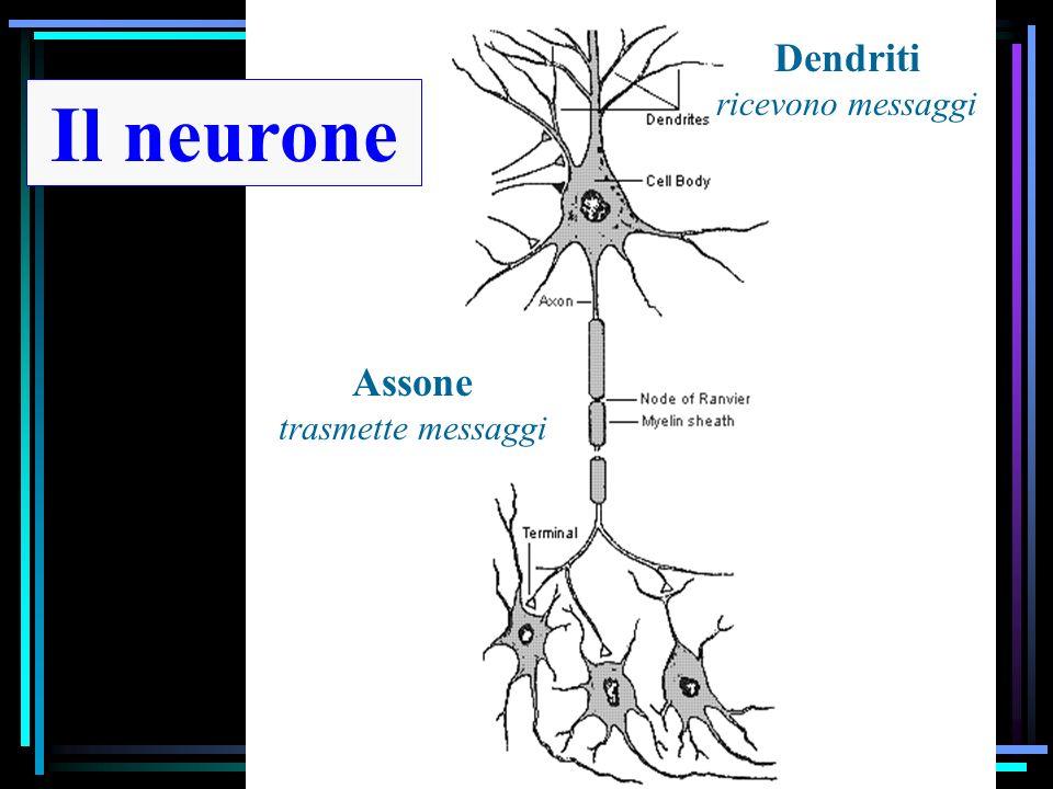 Neurobiologia delle emozioni Approccio evoluzionistico Emozioni Relazione tra cervello ed emozioni Cervello