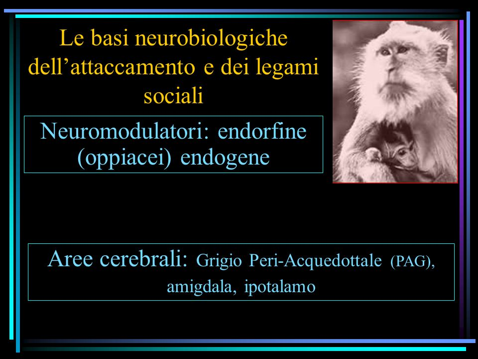 Le basi neurobiologiche dellattaccamento e dei legami sociali Neuromodulatori: endorfine (oppiacei) endogene Aree cerebrali: Grigio Peri-Acquedottale