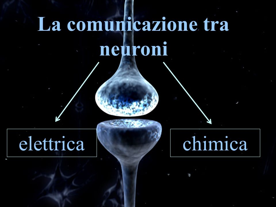 La comunicazione tra neuroni elettricachimica