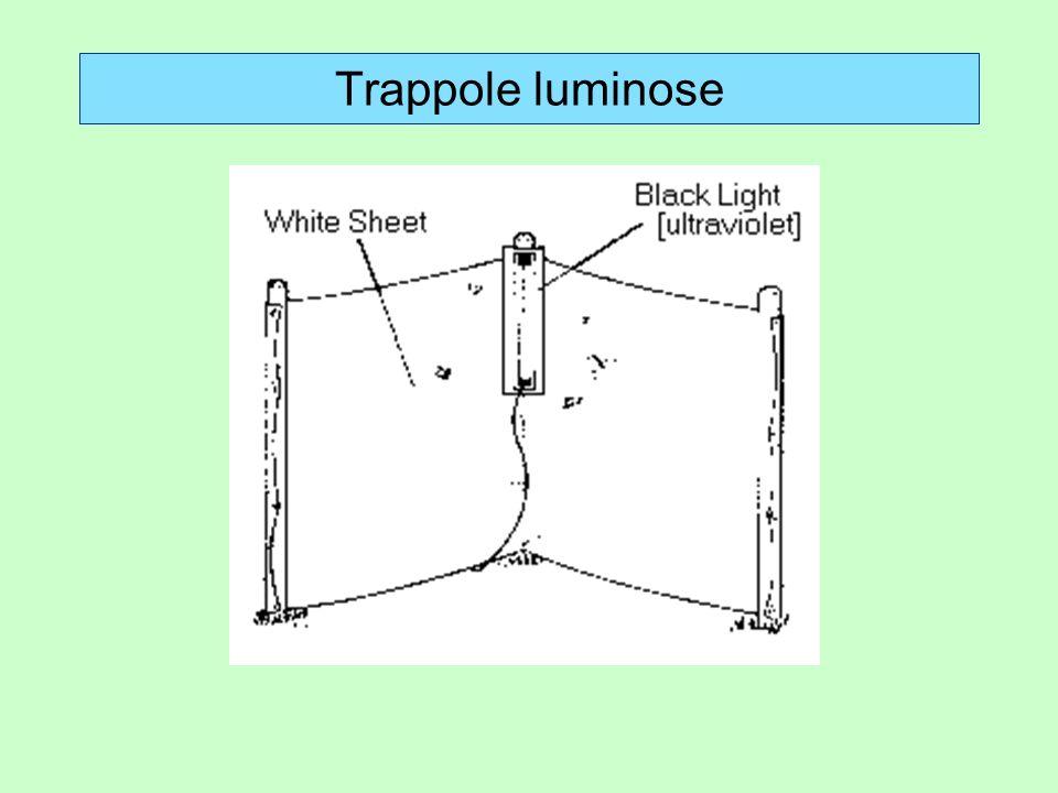 Trappole luminose