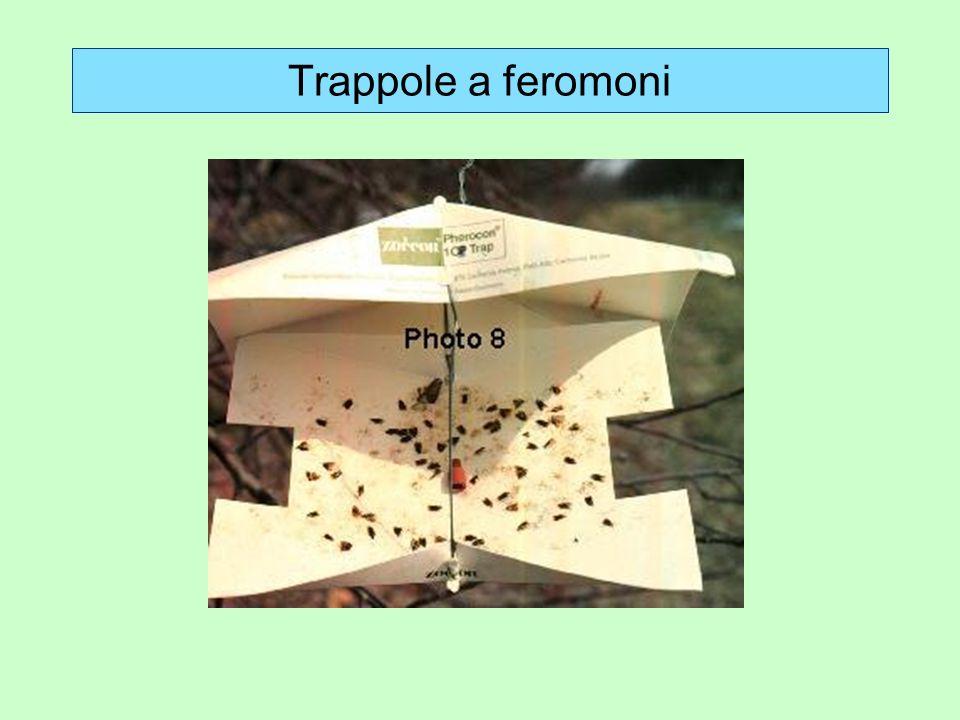 Trappole a feromoni