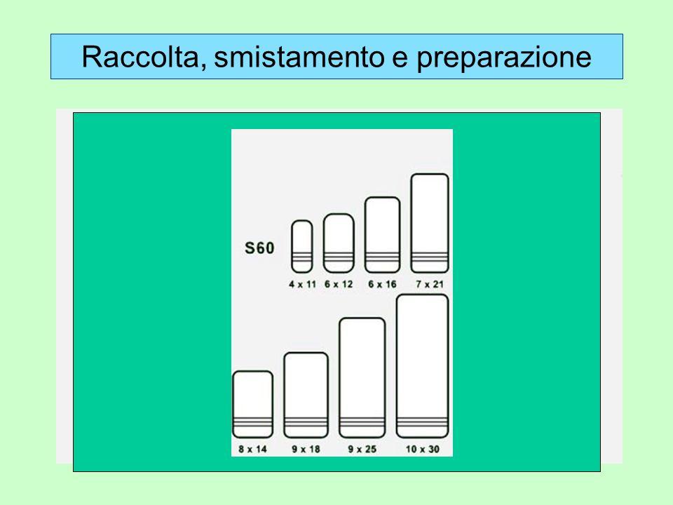 Raccolta, smistamento e preparazione 2. Preparazione b. Coleotteri, emitteri, ecc: grandi dimensioni, spillati; piccole dimensioni: incollati su carte