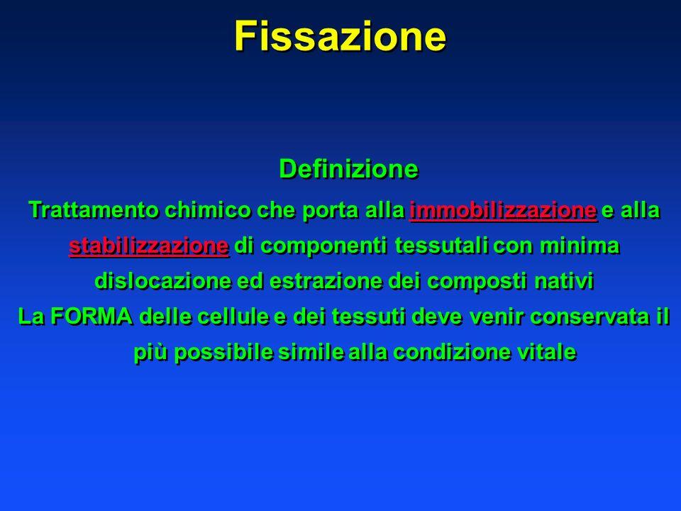Fissazione Definizione Trattamento chimico che porta alla immobilizzazione e alla stabilizzazione di componenti tessutali con minima dislocazione ed e
