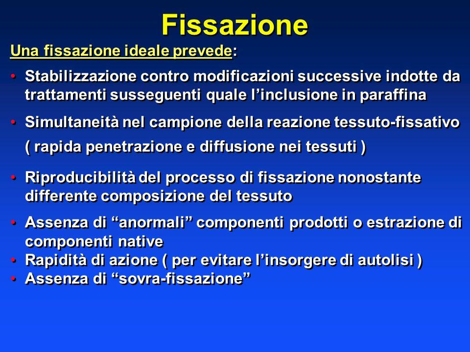 Fissazione Una fissazione ideale prevede: Stabilizzazione contro modificazioni successive indotte da trattamenti susseguenti quale linclusione in para