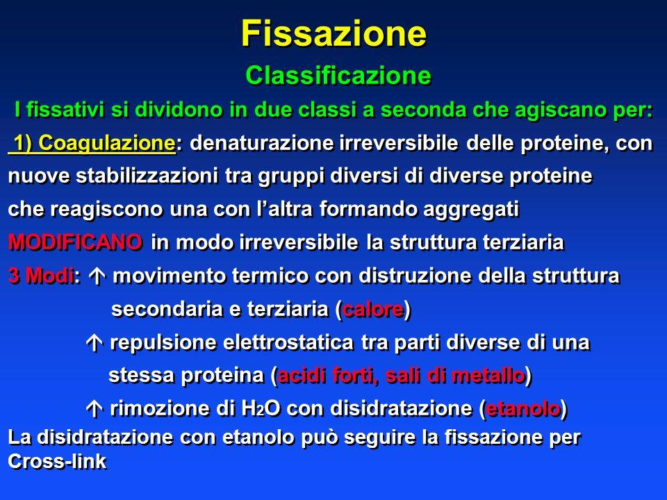 Fissazione Classificazione I fissativi si dividono in due classi a seconda che agiscano per: 1) Coagulazione: denaturazione irreversibile delle protei