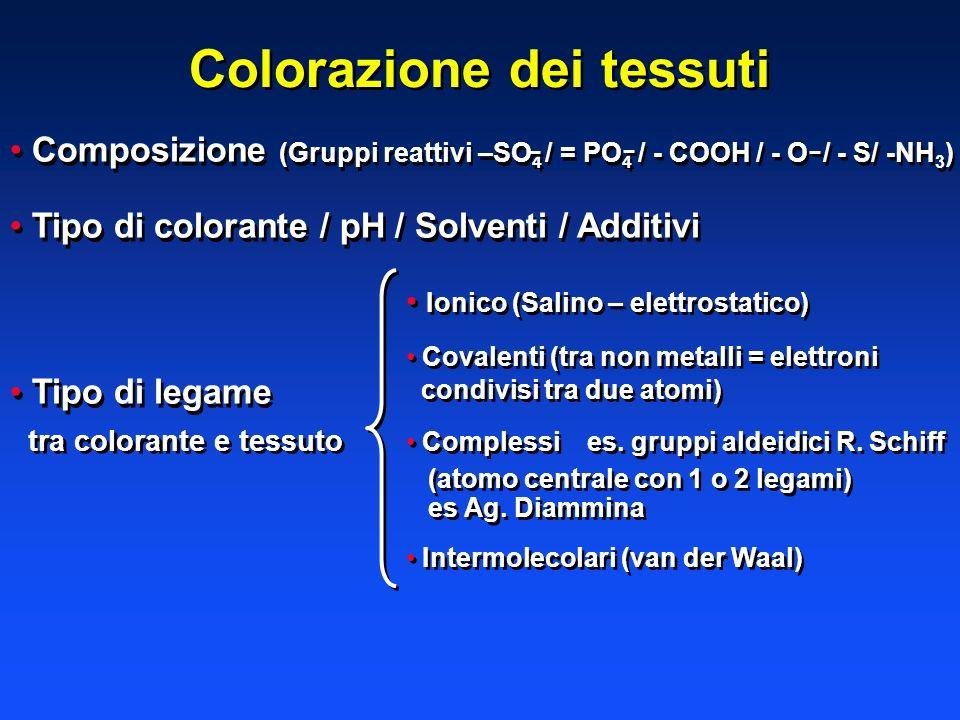 Colorazione dei tessuti Composizione (Gruppi reattivi –SO 4 / = PO 4 / - COOH / - O / - S/ -NH 3 ) Tipo di colorante / pH / Solventi / Additivi Tipo d