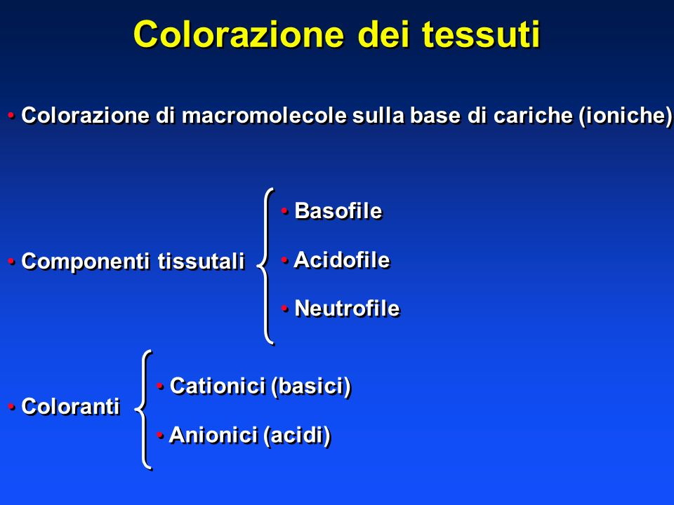 Colorazione dei tessuti Colorazione di macromolecole sulla base di cariche (ioniche) Componenti tissutali Coloranti Colorazione di macromolecole sulla