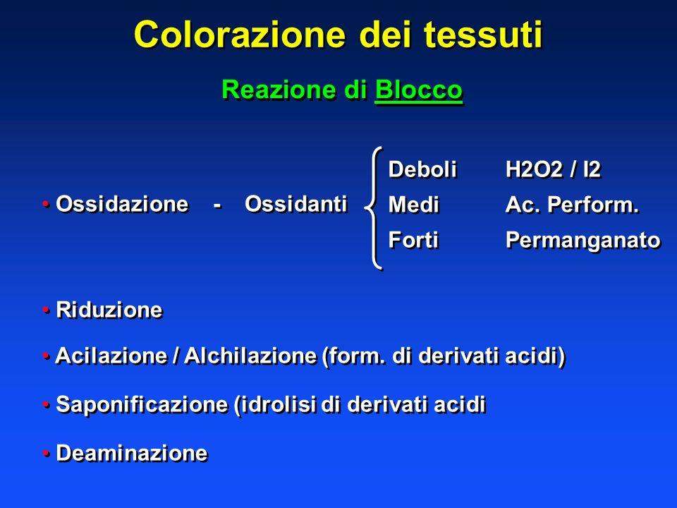 Colorazione dei tessuti Reazione di Blocco Ossidazione -Ossidanti Riduzione Acilazione / Alchilazione (form. di derivati acidi) Saponificazione (idrol