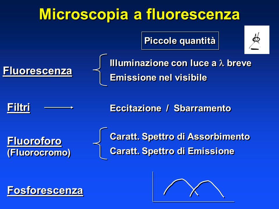 Microscopia a fluorescenza Fluorescenza Illuminazione con luce a breve Emissione nel visibile Illuminazione con luce a breve Emissione nel visibile Fi
