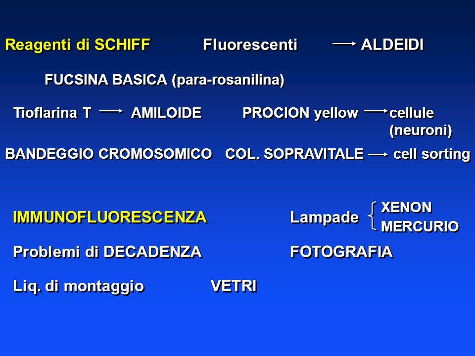 Reagenti di SCHIFFFluorescentiALDEIDI FUCSINA BASICA (para-rosanilina) Tioflarina T AMILOIDEPROCION yellow cellule (neuroni) BANDEGGIO CROMOSOMICO COL