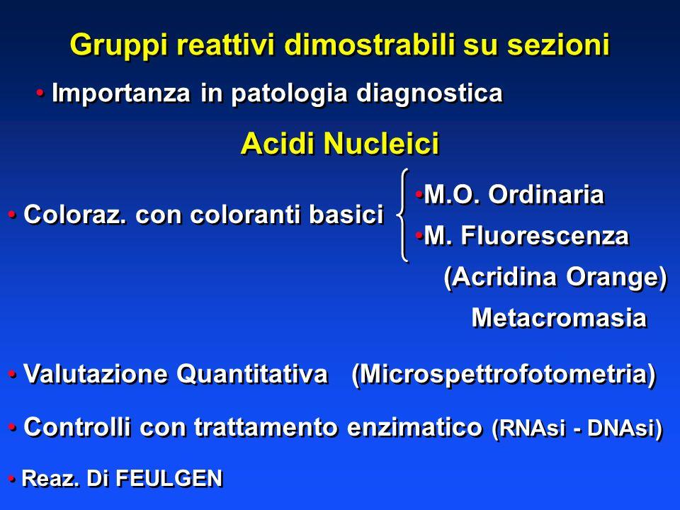 Gruppi reattivi dimostrabili su sezioni Importanza in patologia diagnostica Acidi Nucleici Coloraz. con coloranti basici Valutazione Quantitativa (Mic