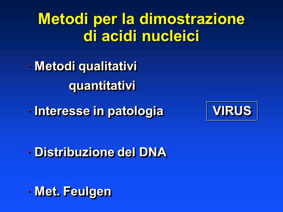 Metodi per la dimostrazione di acidi nucleici Metodi per la dimostrazione di acidi nucleici · Metodi qualitativi quantitativi quantitativi · Interesse