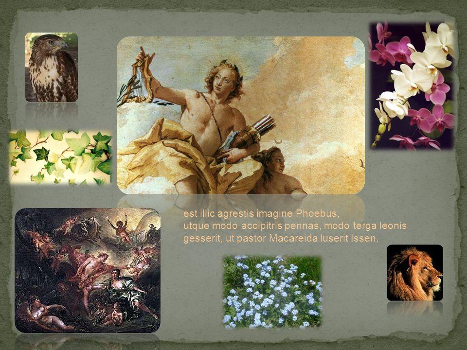 est illic agrestis imagine Phoebus, utque modo accipitris pennas, modo terga leonis gesserit, ut pastor Macareida luserit Issen.