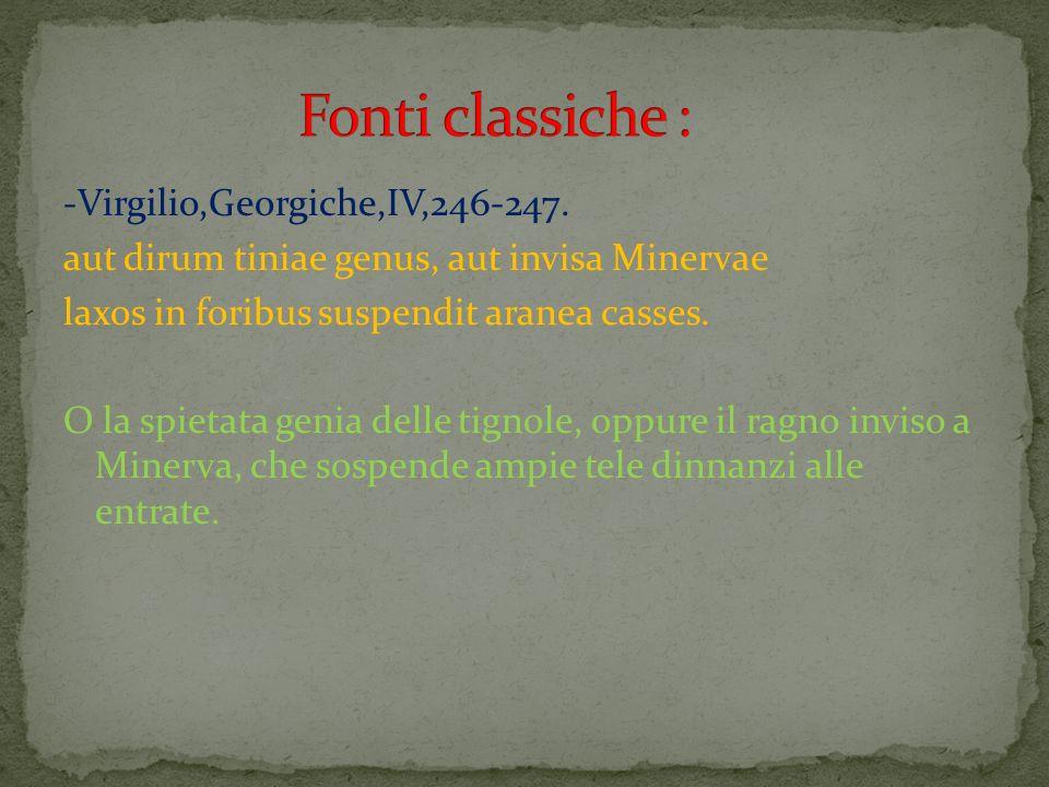 -Virgilio,Georgiche,IV,246-247. aut dirum tiniae genus, aut invisa Minervae laxos in foribus suspendit aranea casses. O la spietata genia delle tignol