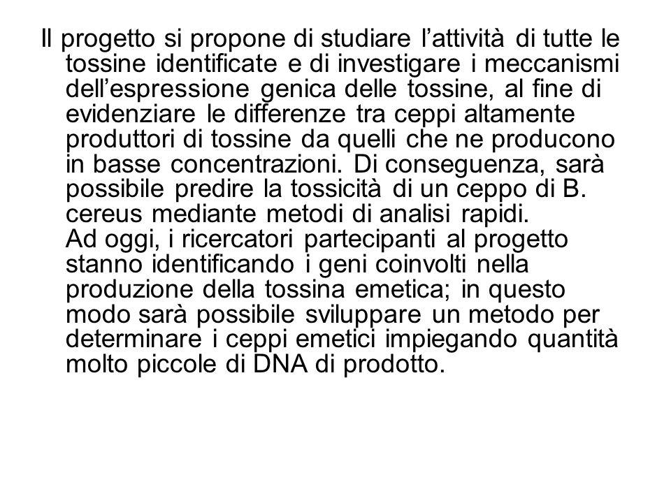Il progetto si propone di studiare lattività di tutte le tossine identificate e di investigare i meccanismi dellespressione genica delle tossine, al f