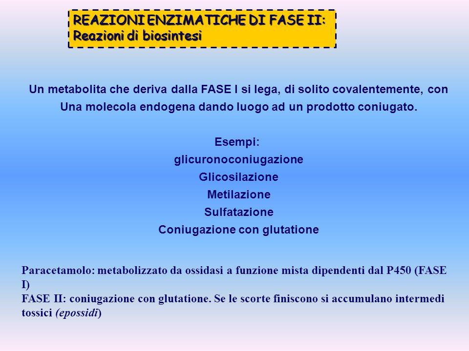 REAZIONI ENZIMATICHE DI FASE II: Reazioni di biosintesi Un metabolita che deriva dalla FASE I si lega, di solito covalentemente, con Una molecola endo