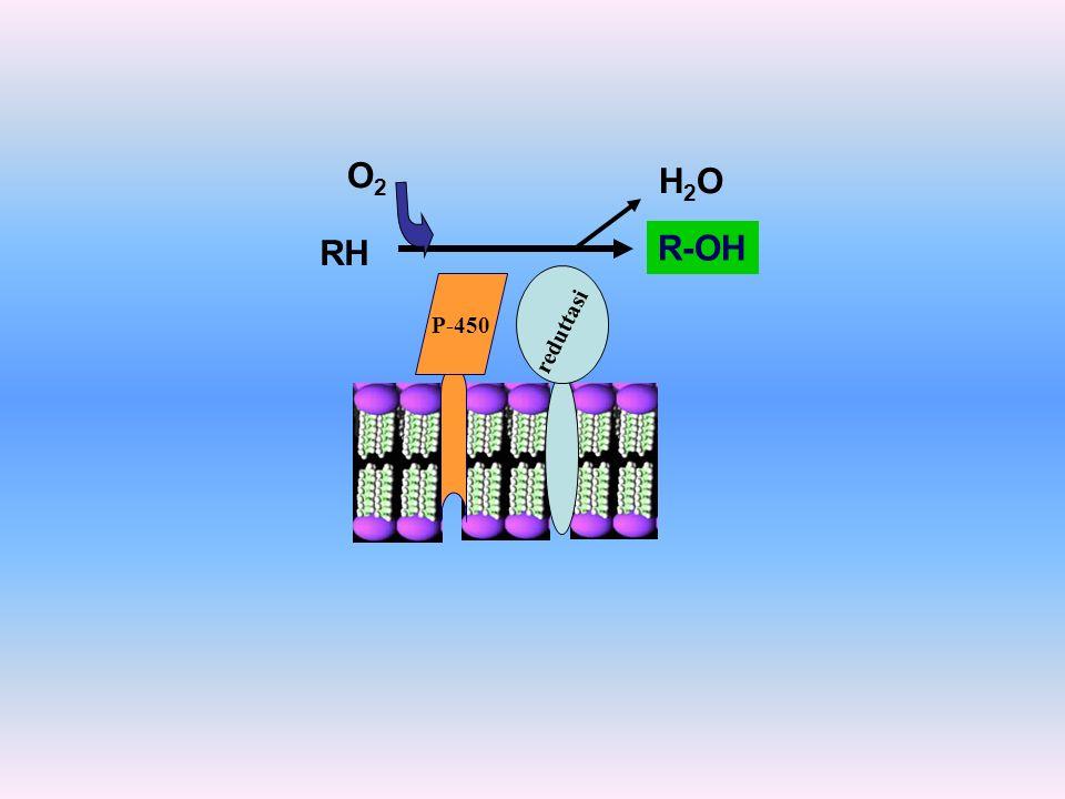 P-450 reduttasi RH R-OH H2OH2O O2O2