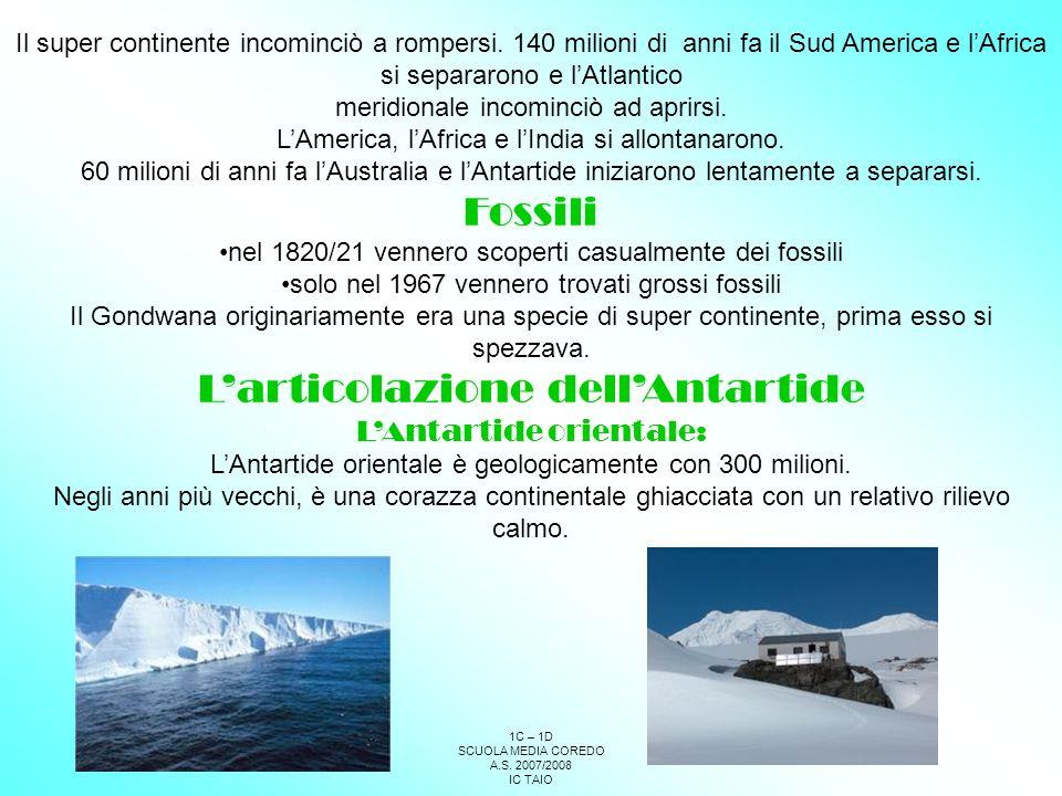 1C – 1D SCUOLA MEDIA COREDO A.S.2007/2008 IC TAIO Die Pinguine sind 18 Arten unterschieden.