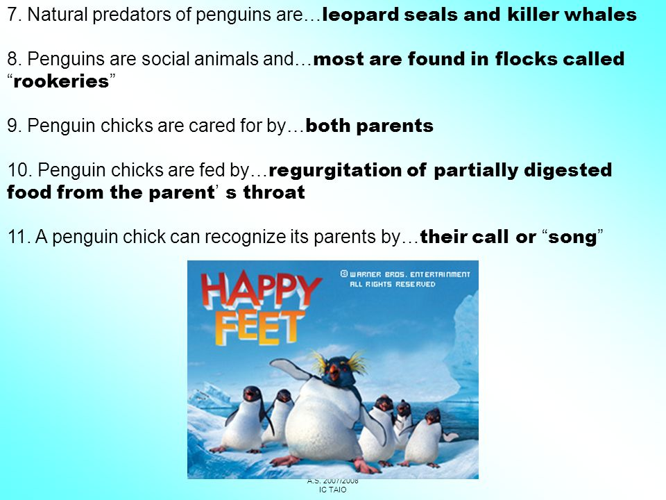1C – 1D SCUOLA MEDIA COREDO A.S. 2007/2008 IC TAIO 7. Natural predators of penguins are… leopard seals and killer whales 8. Penguins are social animal