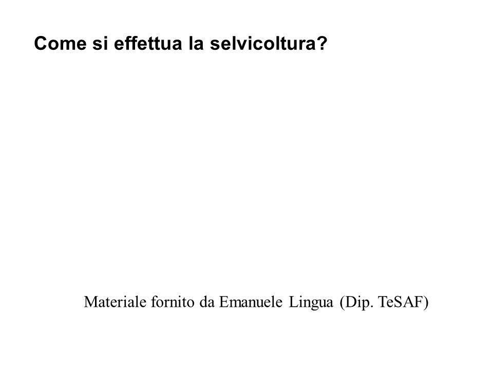 Come si effettua la selvicoltura? Materiale fornito da Emanuele Lingua (Dip. TeSAF)