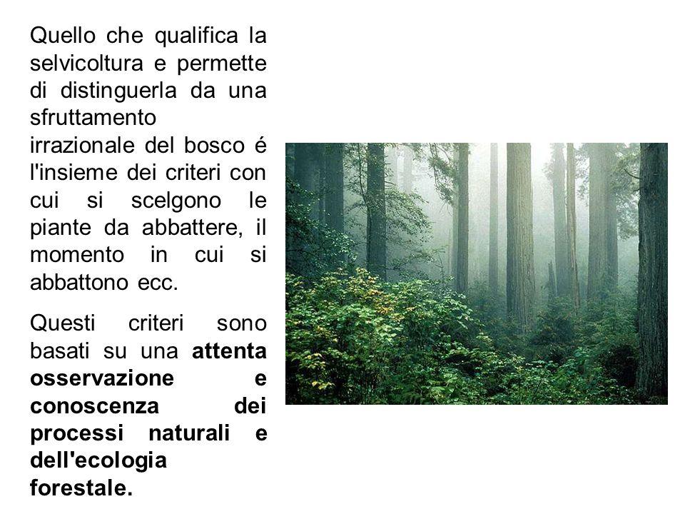 Quello che qualifica la selvicoltura e permette di distinguerla da una sfruttamento irrazionale del bosco é l'insieme dei criteri con cui si scelgono