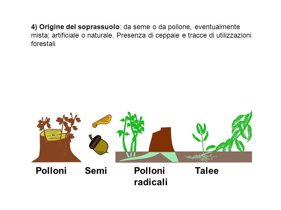 SemiPolloniPolloni radicali Talee 4) Origine del soprassuolo: da seme o da pollone, eventualmente mista; artificiale o naturale. Presenza di ceppaie e