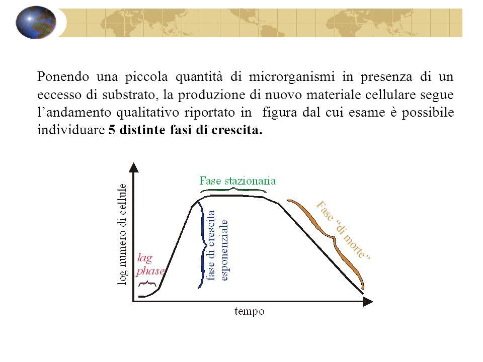 1) fase di induzione e di crescita accelerata.