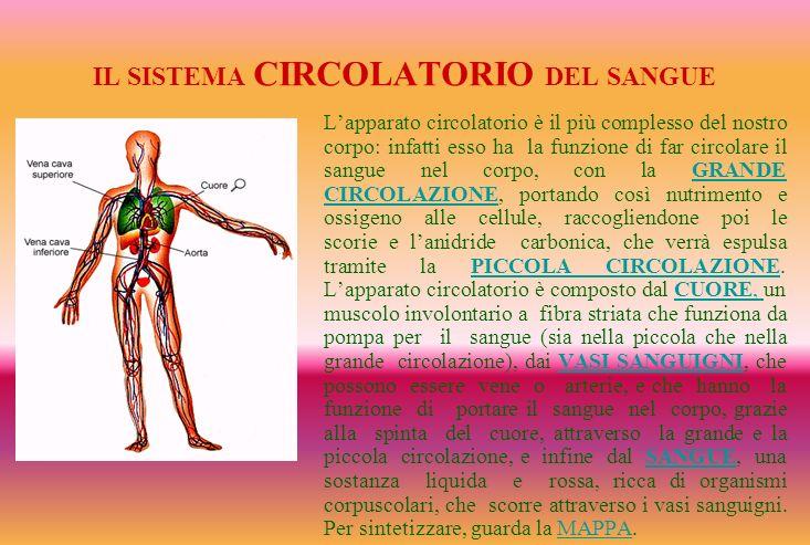 IL SISTEMA CIRCOLATORIO DEL SANGUE Lapparato circolatorio è il più complesso del nostro corpo: infatti esso ha la funzione di far circolare il sangue