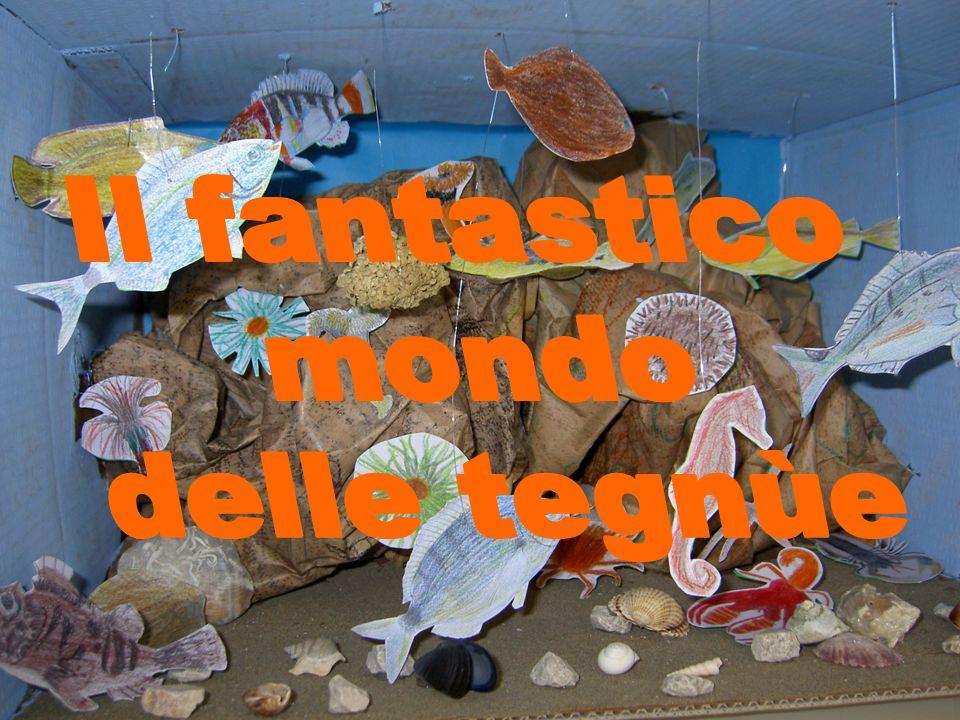 Questo lavoro nasce dalla visita al Grande acquario delle tegnùe che si trova al museo di Storia Naturale di Venezia, dove abbiamo potuto partecipare a dei laboratori didattici organizzati dall Associazione Naturalistica Limosa.