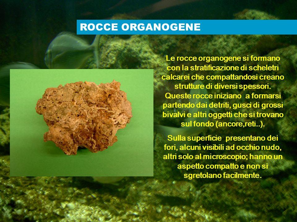 ROCCE ORGANOGENE Le rocce organogene si formano con la stratificazione di scheletri calcarei che compattandosi creano strutture di diversi spessori. Q
