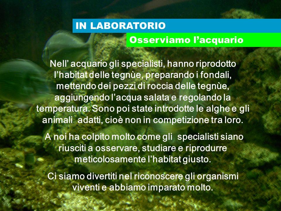 IN LABORATORIO Osserviamo lacquario Nell acquario gli specialisti, hanno riprodotto lhabitat delle tegnùe, preparando i fondali, mettendo dei pezzi di