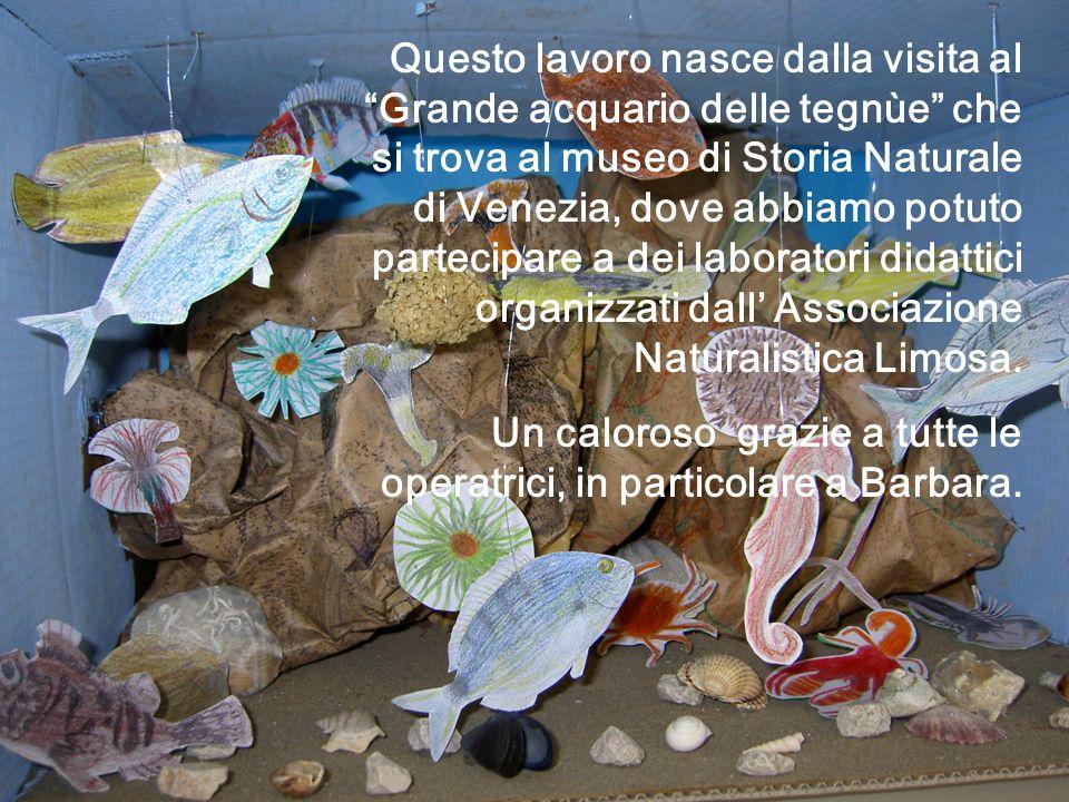 Questo lavoro nasce dalla visita al Grande acquario delle tegnùe che si trova al museo di Storia Naturale di Venezia, dove abbiamo potuto partecipare