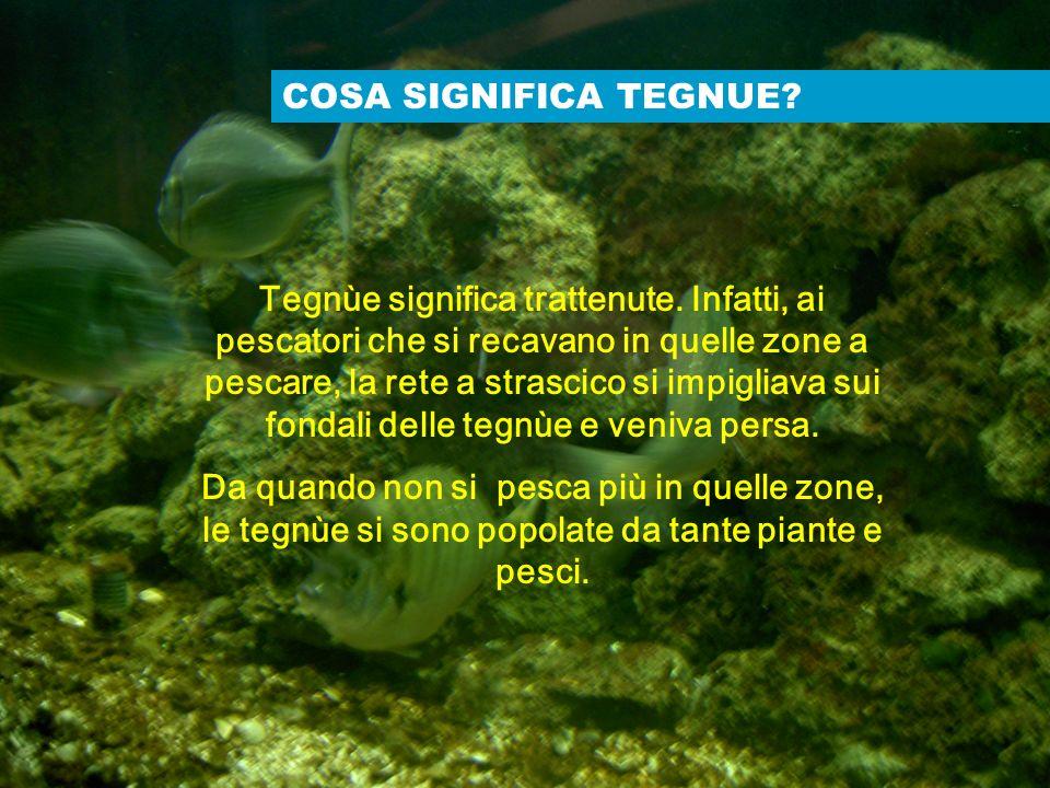 Prepariamo la nostra raccolta LABORATORIO DI MALACOLOGIA Malacologia: ramo della zoologia che studia i molluschi.