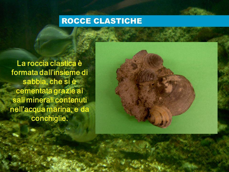 ROCCE CLASTICHE La roccia clastica è formata dallinsieme di sabbia, che si è cementata grazie ai sali minerali contenuti nellacqua marina, e da conchi