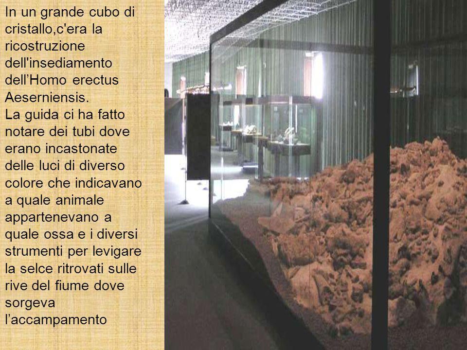 In un grande cubo di cristallo,c'era la ricostruzione dell'insediamento dellHomo erectus Aeserniensis. La guida ci ha fatto notare dei tubi dove erano