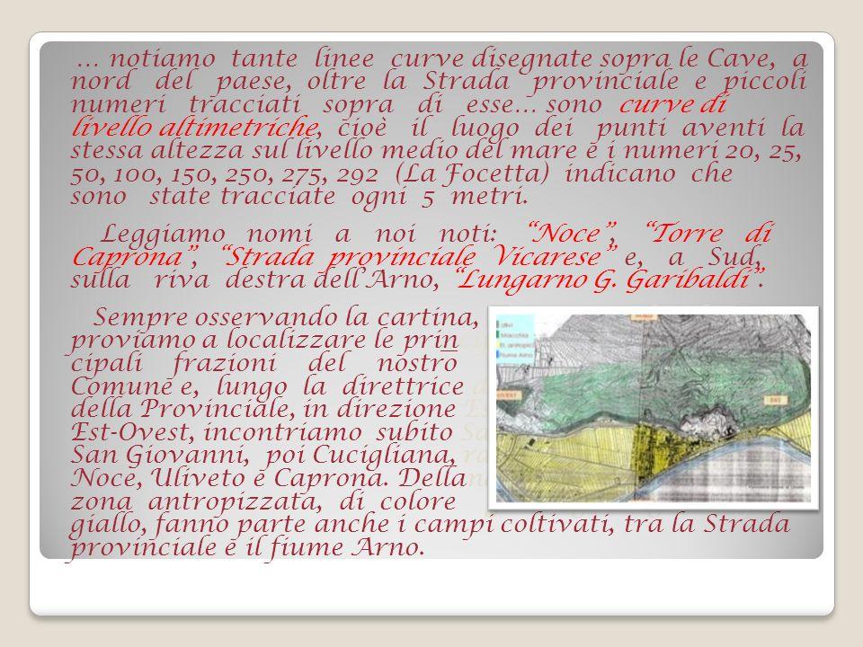 Vogliamo ora porre la nostra attenzione sulle zone di coltivazione dellulivo, che sulla cartina abbiamo evidenziato usando il colore grigio.