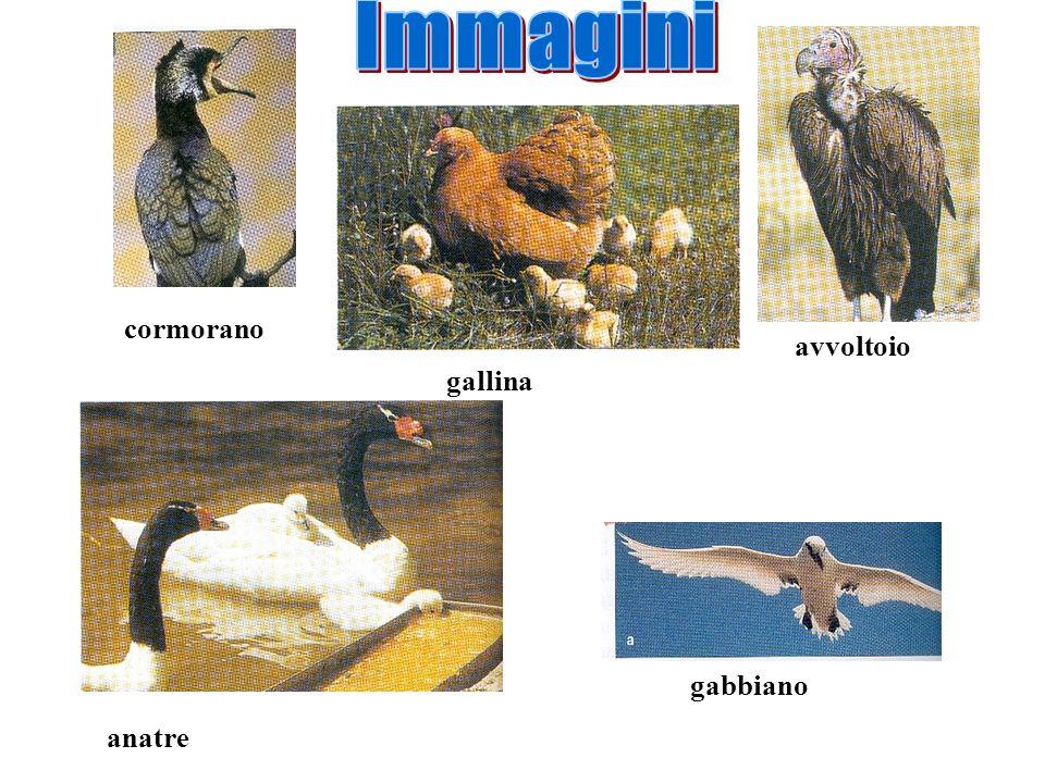 Il nido è una struttura che gli uccelli costruiscono per covare le uova e allevare la prole