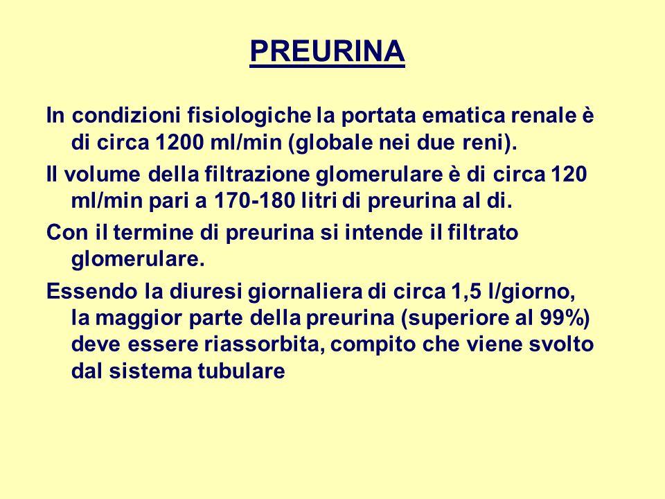 PREURINA In condizioni fisiologiche la portata ematica renale è di circa 1200 ml/min (globale nei due reni). Il volume della filtrazione glomerulare è