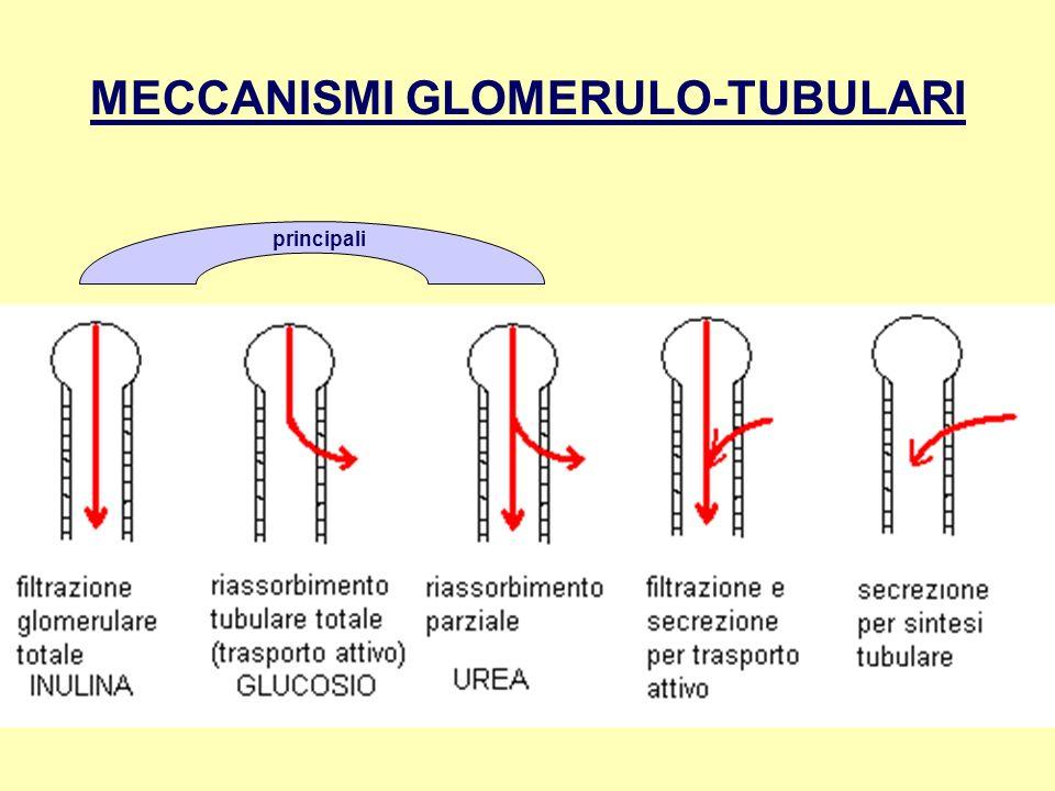 MECCANISMI GLOMERULO-TUBULARI principali
