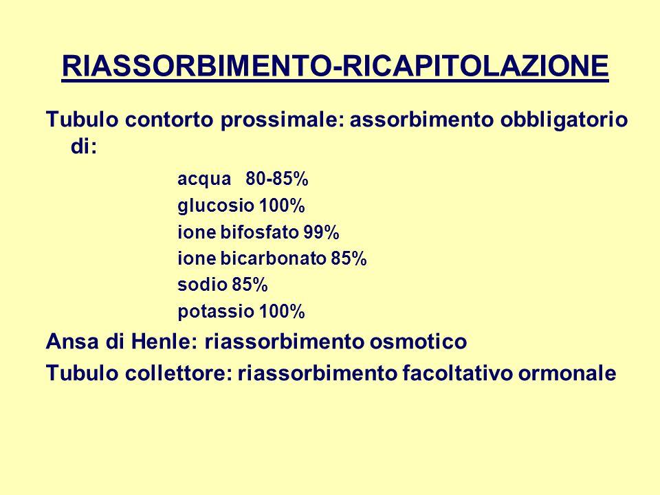 RIASSORBIMENTO-RICAPITOLAZIONE Tubulo contorto prossimale: assorbimento obbligatorio di: acqua 80-85% glucosio 100% ione bifosfato 99% ione bicarbonat
