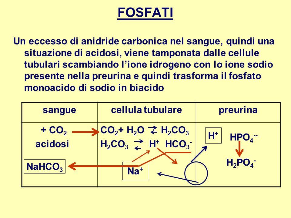 FOSFATI Un eccesso di anidride carbonica nel sangue, quindi una situazione di acidosi, viene tamponata dalle cellule tubulari scambiando lione idrogen