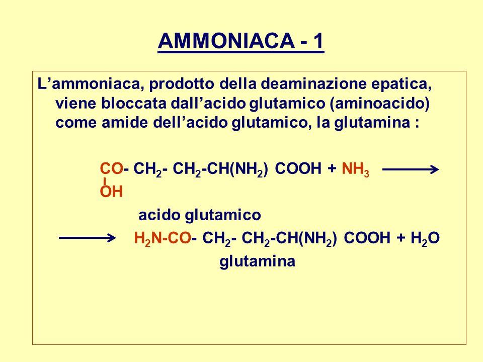 AMMONIACA - 1 Lammoniaca, prodotto della deaminazione epatica, viene bloccata dallacido glutamico (aminoacido) come amide dellacido glutamico, la glut