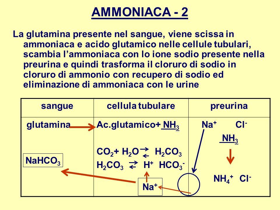 AMMONIACA - 2 La glutamina presente nel sangue, viene scissa in ammoniaca e acido glutamico nelle cellule tubulari, scambia lammoniaca con lo ione sod